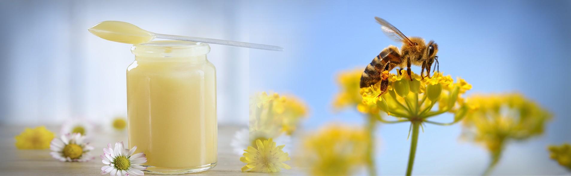 Connue pour ses nutriments exceptionnels, notre Gelée Royale Bio est réputée pour ses multiples effets bénéfiques.